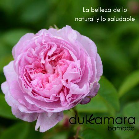 Rosa Centifolia. Dulkamara bamboo.
